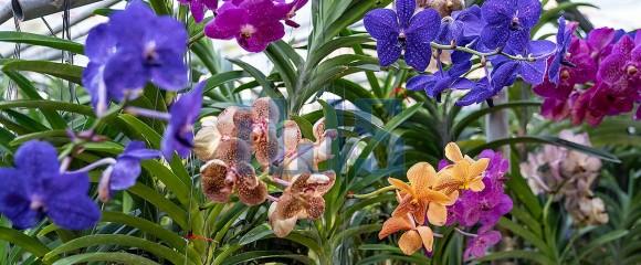 Orchid farm